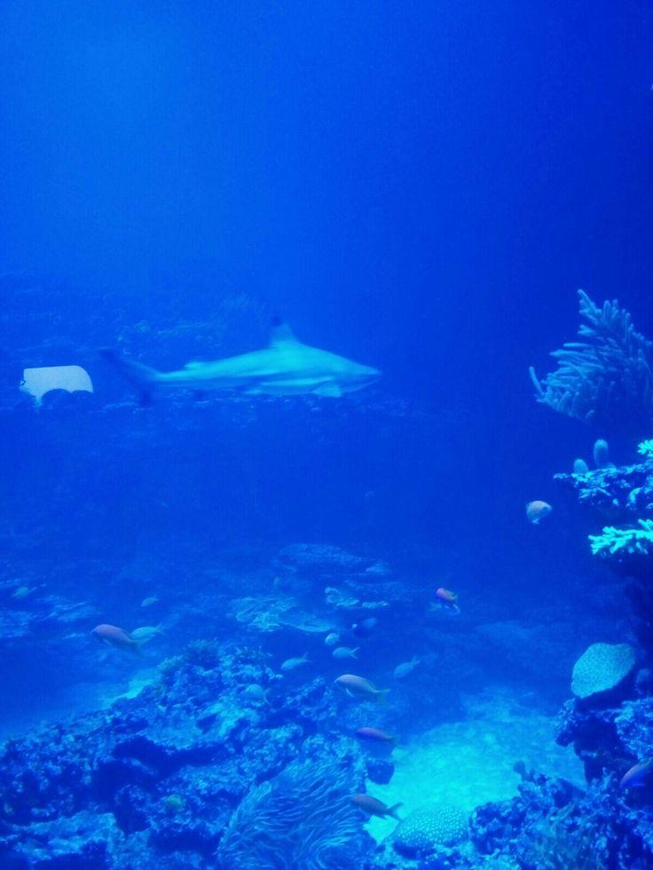 #Karlsruhe #naturkunde #naturkundemuseum #hai #salzwasseraquarium #fish #fische #ececenter