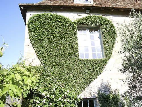 Heart Window - so so cuteSweets Home, Green Home, Heart Shape, My Heart, House, Heart Windows, Gardens Parties, Ivy Heart, Design Blog