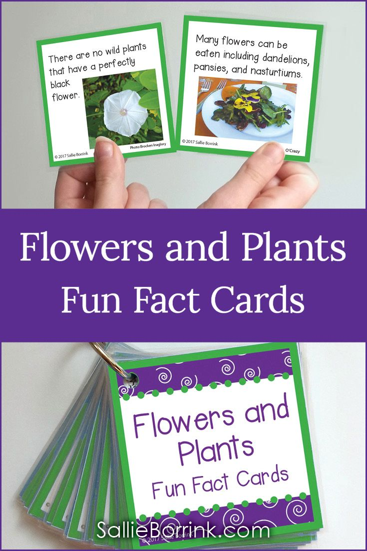 Fun Facts About Gardening For Kids