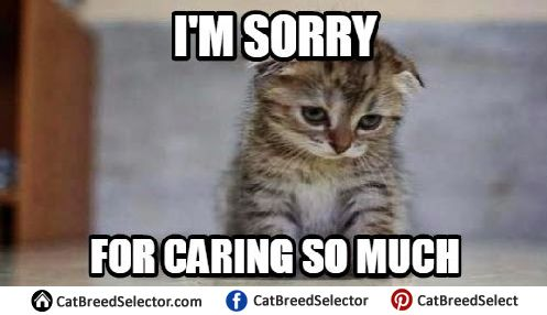 Really Sad Cat Meme