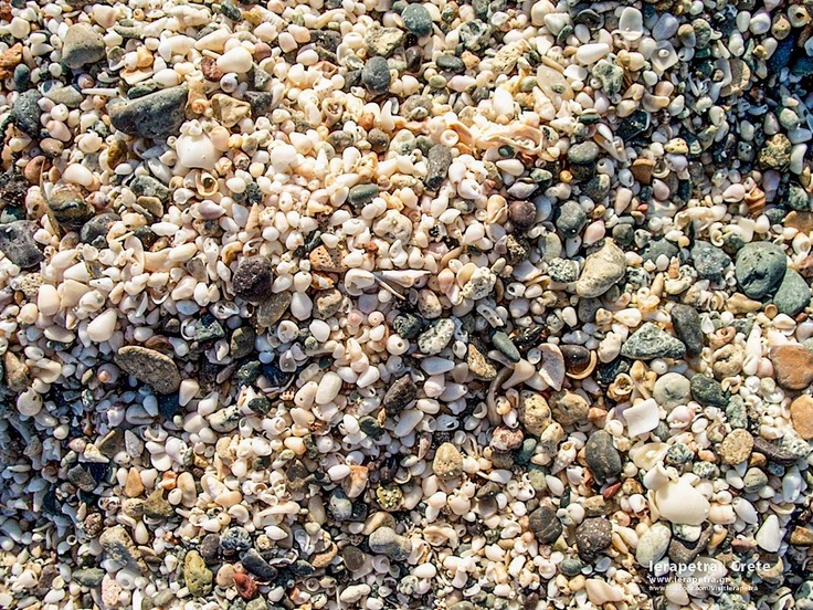 Shells! Imagine the whole #beach littered with them. | Κοχύλια! Φανταστείτε όλη την παραλία στρωμένη με αυτά. ( CC-BY- ND )