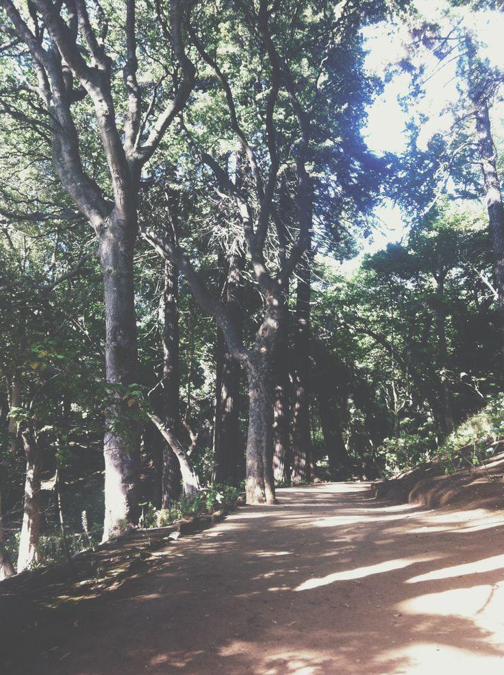 Parque de Lota, Chile.