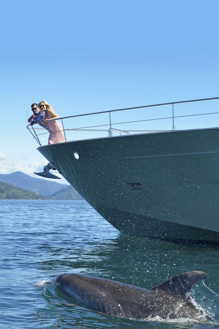 See dolphins from aboard MV Tarquin - your own luxurious cruise charter, with private chef and crew.