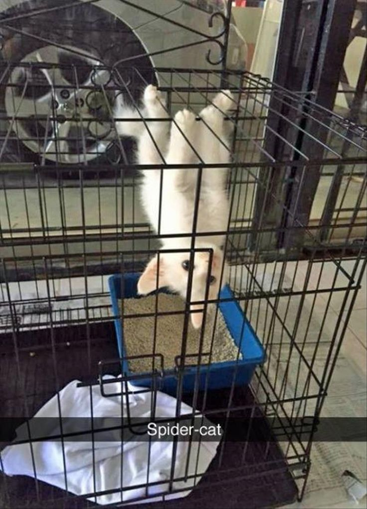 Funny Animal Pictures Of The Day – 27 Pics More