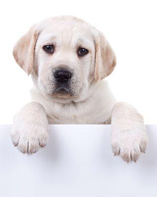 Le unghie del cane Consigli utili per il taglio delle unghie del cane.