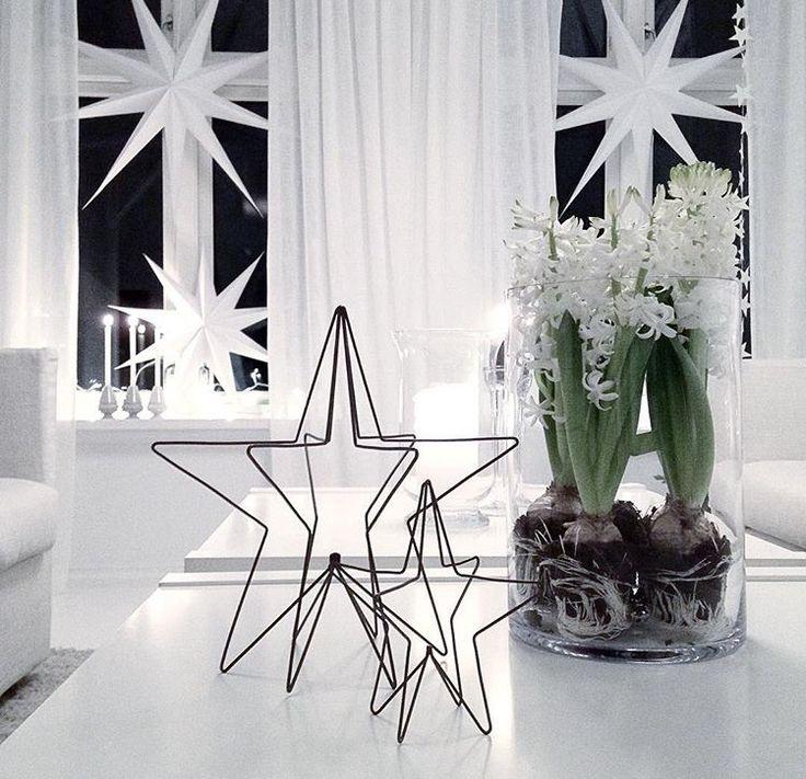 Jul. Hyacint. Stjärna. Vitt.
