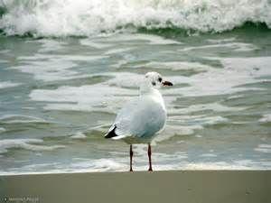 skóra bez Bandi to jak polskie morze bez Mew ;-)