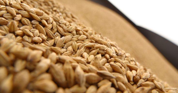 El gluten en el pan Ezequiel. Los productos de pan de granos germinados Ezequiel, elaborados por Food For Life, son panes sin harina. Debido a que el grano utilizado para producir este tipo de pan no se muele, los panes de grano germinado generalmente aún poseen granos que contienen gluten, como el trigo, la cebada y el centeno. Food for Life elabora productos libres de ...