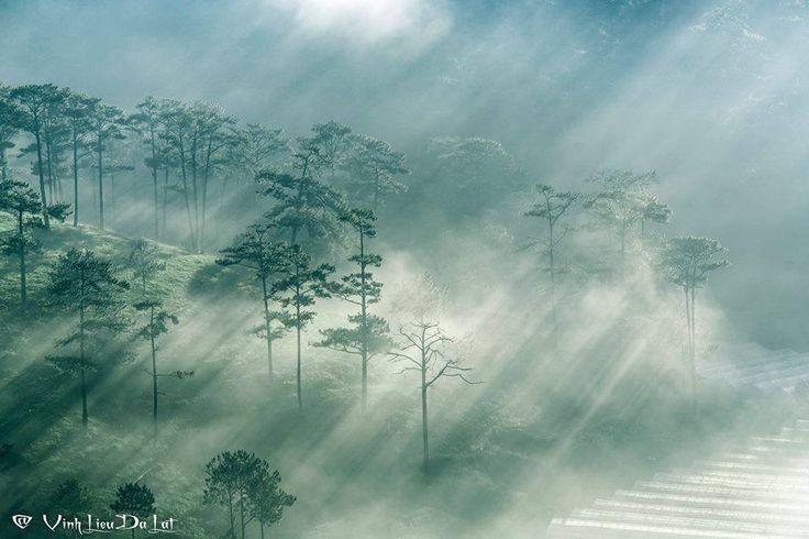 Known as city of fog, Da Lat amazes visitors with its signature beauty. Photo by Lieu Vinh #vietnam #idealtravel #travelasia #bestvacations #viajar #trip #travelgram #travel #travelling #aroundtheworld #photooftheday #photography #photographylovers #pictureoftheday #traveladdict #journey