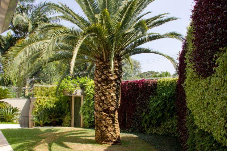 jardim vertical autocad: Exuberante Jardim no Pinterest