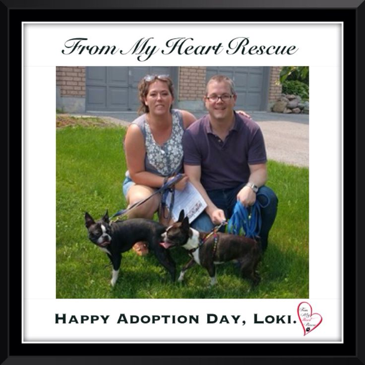 #Please ❤️+ #Pin #FMHR #FromMyHeartRescue #RescueWithoutBorders #SavingOneDogAtaTime ~ #Happy #Adoption #Day #Loki *Many thanks to Kelly B,  Meghan, Christine & family, for all their hard work behind the scenes. *Thank you❤️ *Info, Foster, Adoption, PayPal & e-transfer: frommyheartrescue@hotmail.com *Our Vets: Brock St. Animal Hospital/FMHR 905-430-2644 *Fundraising & Volunteering: FMHRfundraising@hotmail.com    *www.frommyheartrescue.com  *Find Us: Petfinder, FB, Twitter, IG, YT, G+
