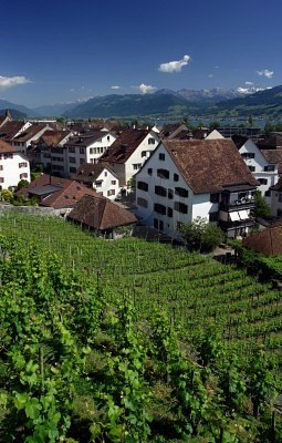 Zurich Vineyards, Switzerland - we stayed at a Bed and Breakfast thats just around the corner from here. Those vineyards were really neat.