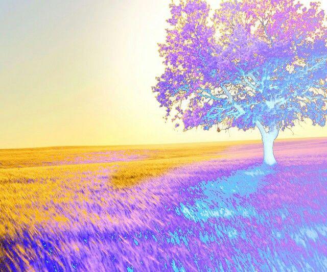 a világitó fa