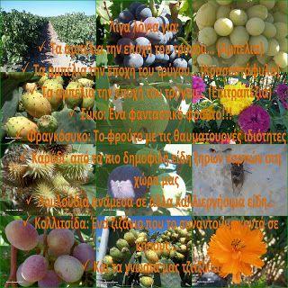 ΡΟΔΟΣυλλέκτης: Φρούτα και αλλά είδη της εποχής… Μια φωτογραφική π...
