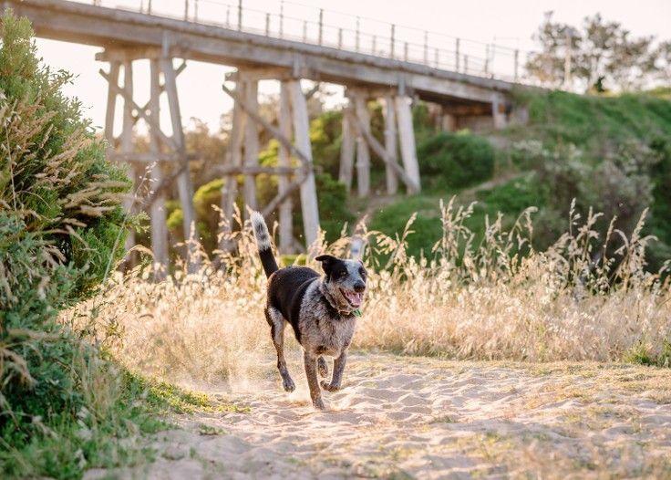 Cooper, by                                                 Bitsa Bernard Photography