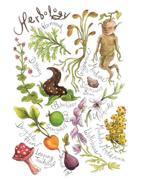 Movie Treasures By Brenda: Harry Potter Herbology Print. Ace that Hogwarts Schoo…