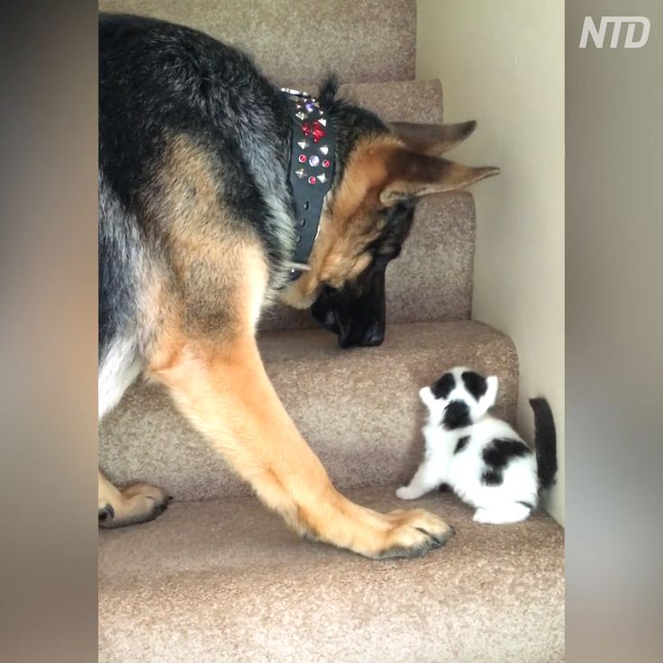 Pin by cathy redfearn on dogscats video cute baby