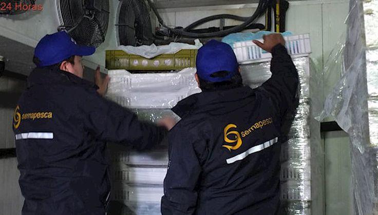 Funcionarios del Sernapesca piden suma urgencia al proyecto de modernización del servicio