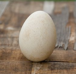 Equinox Folklore Question: According to folklore, you can stand a raw egg on its end on the equinox. Is this true? Find out!
