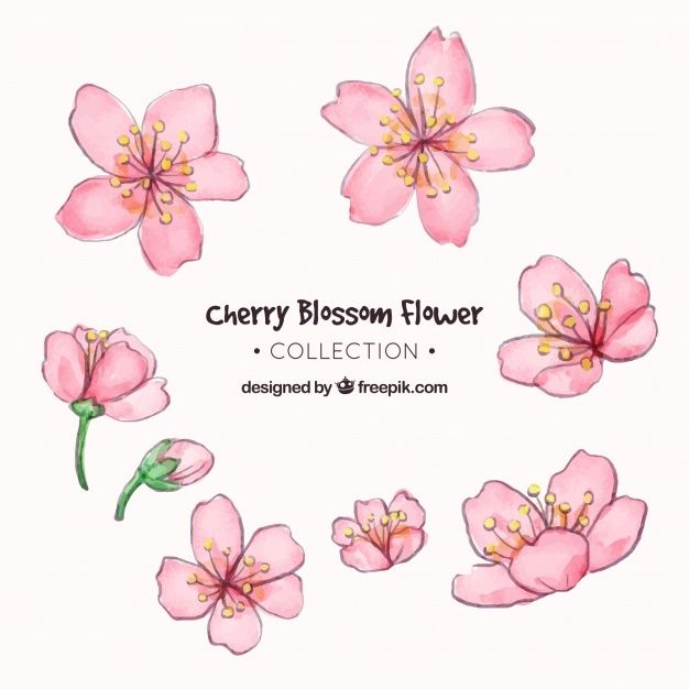 Cherry blossom collection in watercolor style. Dow…