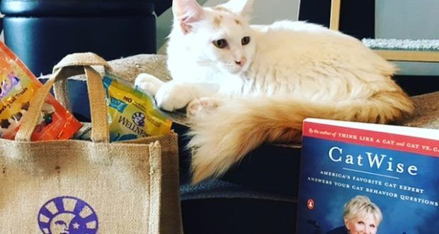 Cat Behavior Why Your Cats May Not Be Getting Along Cat Brain