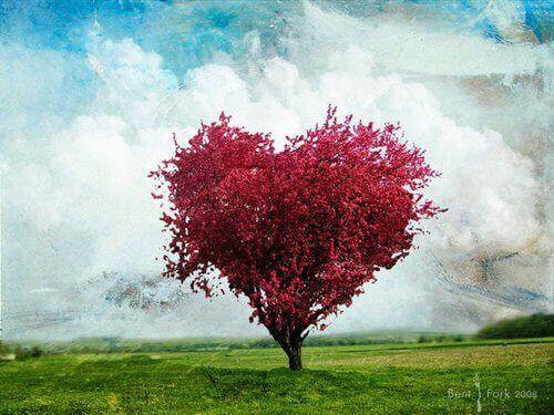 Arbre-rose-en-forme-de-coeur