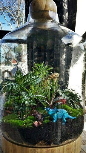 Loving this terrarium!
