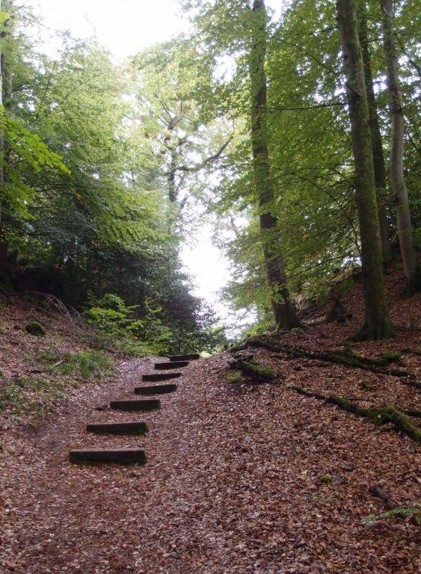 #Mullerthal C6 stairs #luxembourg #landscape