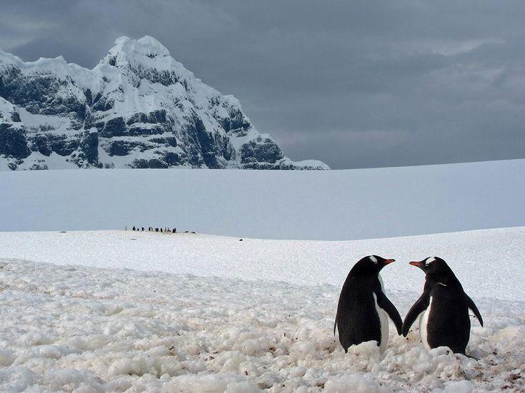Penguin Pair, Antarctica Photograph by Marius Ilies, Your Shot