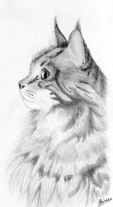 how to draw a realistic cat for beginners