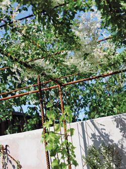 En pergola ger dig ett skönt trädgårdsrum där du kan njuta av både svala sommarmåltider och skön vila.