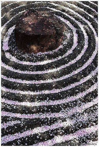 Fallen sakura petals on zen garden, Taizo-in temple, Kyoto