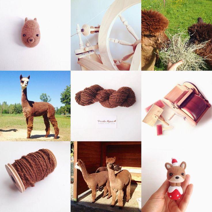 Vedi la foto di Instagram di @piccolo_alpaca • Piace a 8 persone