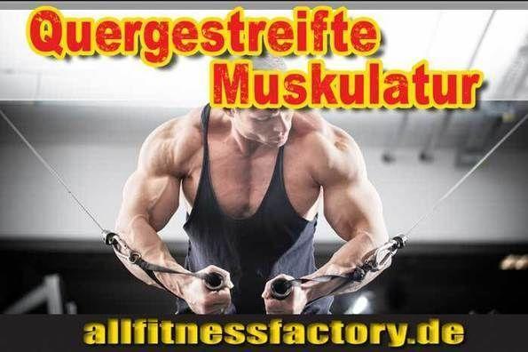 Für Sie gelesen bei: http://www.allfitnessfactory.de  Quergestreifte Muskulatur Focus auf die Masseerhöhung  Quergestreifte Muskulatur 4 Tipps für die Optimierung Ihrer Trainingstechnik  Was bedeutet quergestreifte Muskulatur?  Was ist eine Muskel-Hypertrophie?  Welche Übungen können die quergestreifte Muskulatur optimieren?  German Deutsch  http://www.allfitnessfactory.de/quergestreifte-muskulatur/