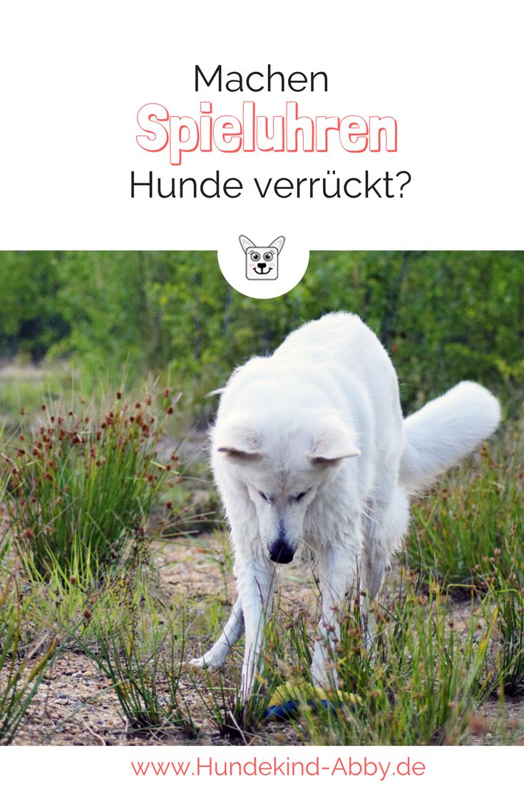 Unser Erstes Buch Lifehacks Fur Hunde Werbung Hundekind Abby Hundeblog Hunde Hundegeschichten Hund Bellt