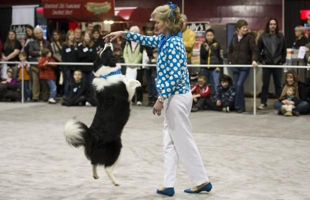 Take a look at this video: http://www.youtube.com/watch?v=efQMXwmIoJU -   Getting the Freestyle Dogs ready for our upcoming productions. A Big Thank You to Sue Mayborne of Shoreland Kennel for 4 great Border Collies as well as Lorraine Effa of Loriben Yorkies for 2 great Yorkshire Terriers!