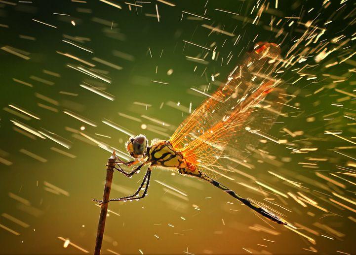 Dragnofly