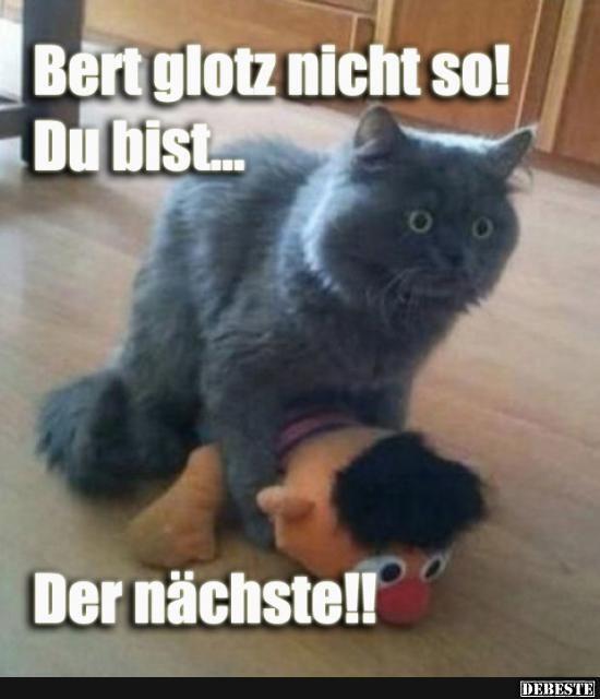 Bert glotz nicht so!.. | Lustige Bilder, Sprüche, Witze, echt lustig