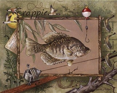 Crappie Fish picture