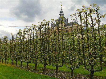Le Potager Du Roi Versailles Garden Fruit Tree Garden