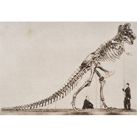 Historical Illustration Of Dinosaur Skeleton Canvas Art - Ken Welsh Design Pics (17 x 11)
