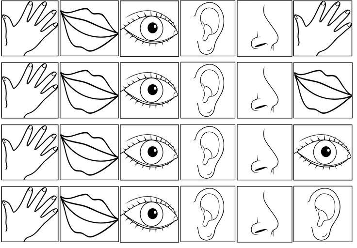 Boberkowy World : Nasze zmysły- zabawy sensoryczne; scenariusz zajęć w przedszkolu