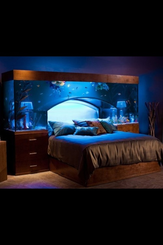 Fish tank bed....