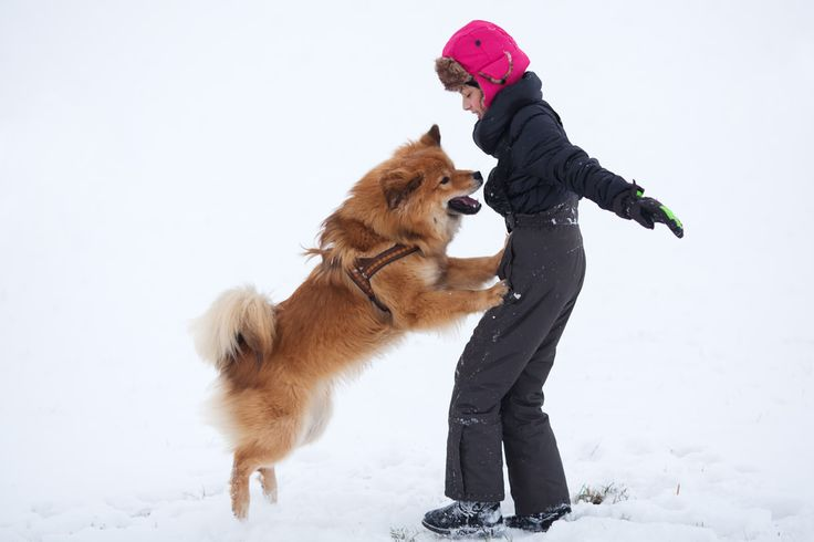 Dogs mostly jump up when they are already excited. For some dogs it is simply a bad habit that has been learned as a way to get attention or affection.