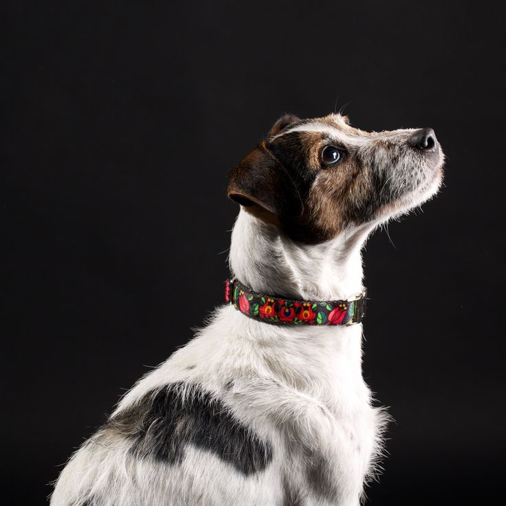 Wuff Hungarian Tulips Collar The Kalocsa motifs are part of our most important heritage, but not only Hungarian dog breeds will look their best wearing our tulip collar!  Item Code: 103 http://www.wuffcollars.com/en/item/Hungarian_Tulips_Collar-103