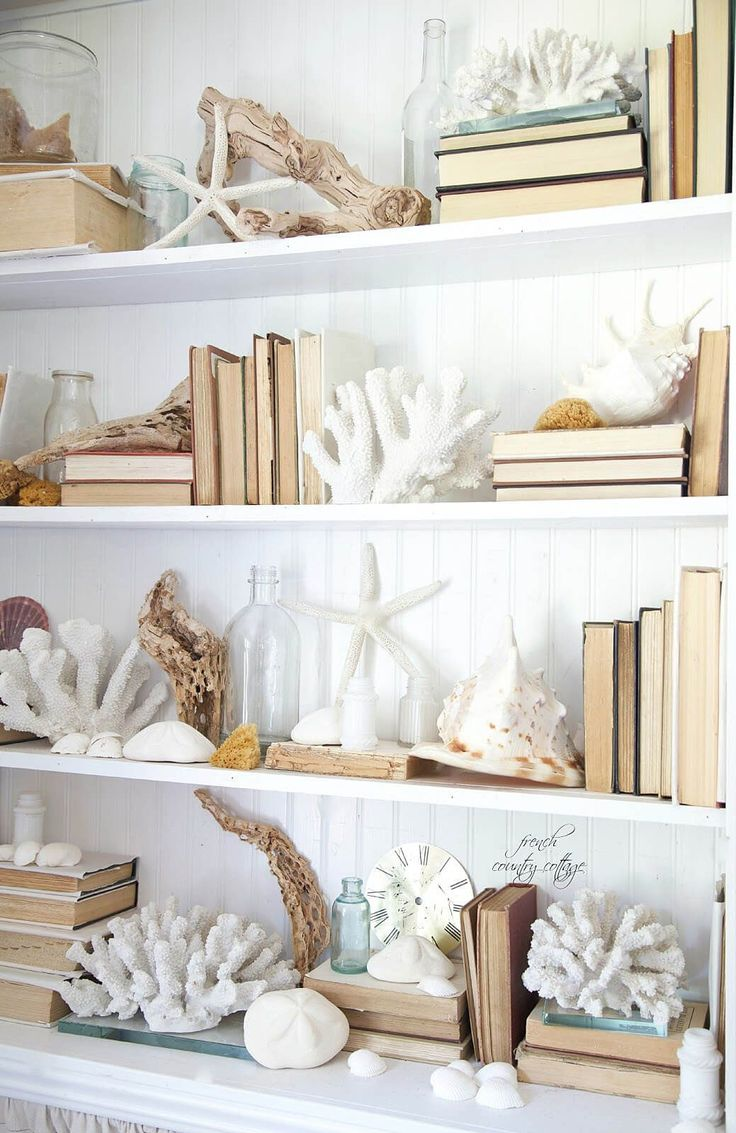 A Bookcase Crawling with Coral and Shells and Driftwood