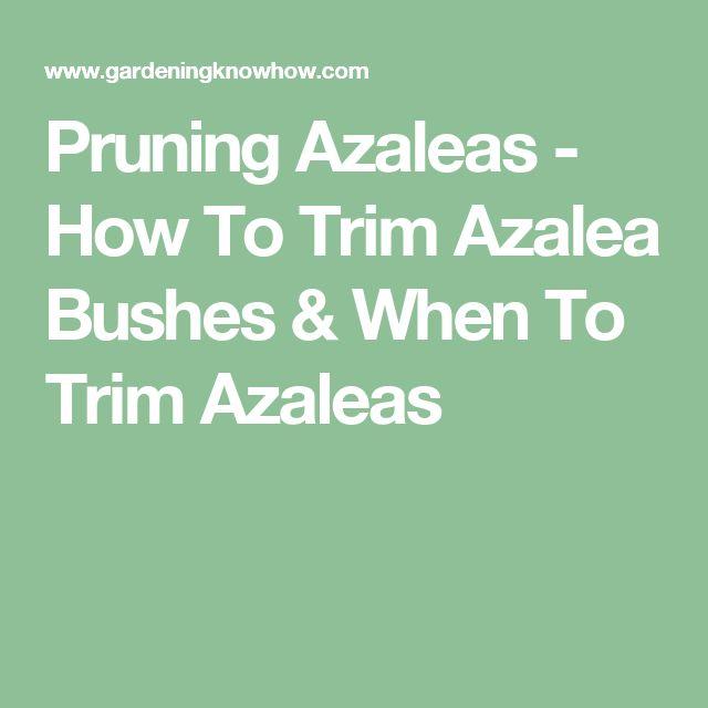 Pruning Azaleas - How To Trim Azalea Bushes & When To Trim Azaleas