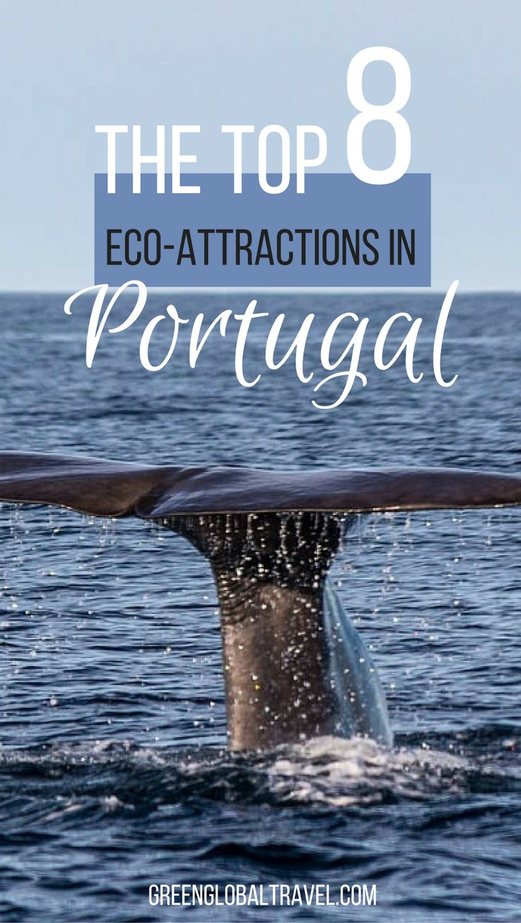 Here's 8 things to do in Portugal for nature lovers | Whale Watching | Azores | Penada-Geres National Park | Birdwatching | Lake Alqueva | Iberian Lynx | Hiking | Madeira | Cycle Touring | Yoga | Camino Portugues |