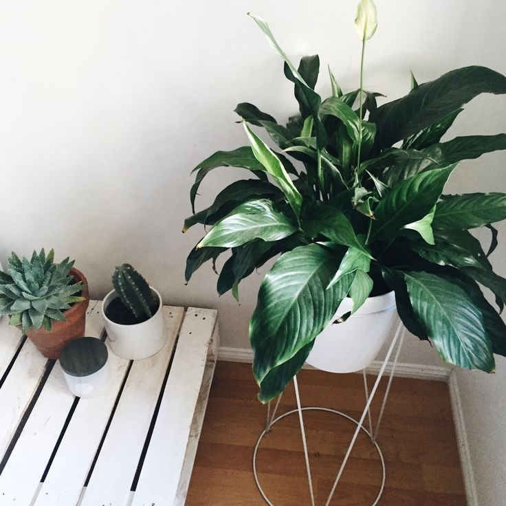 You Can Never Have Too Many Plants · Green LifeGreen HousesIndoor ...