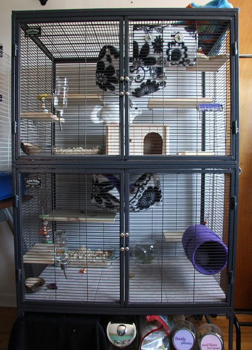 Large two level chinchilla cage with lots of ledges, hammocks and hideouts.
